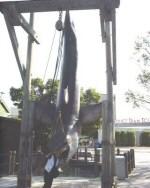 Jaws on the Upper Lot (Photo by John Buckman, 1999)