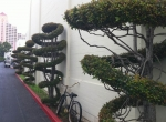 Topiary at Fox Studios