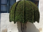 topiary6