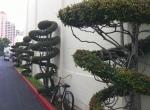 Topiary at Fox Studios