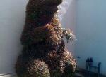 topiary5