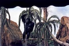gorilla_72