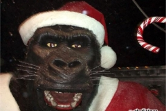 kingkong_christmas2